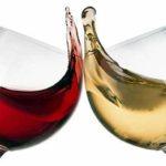 Terra! visita guidata + degustazione vini